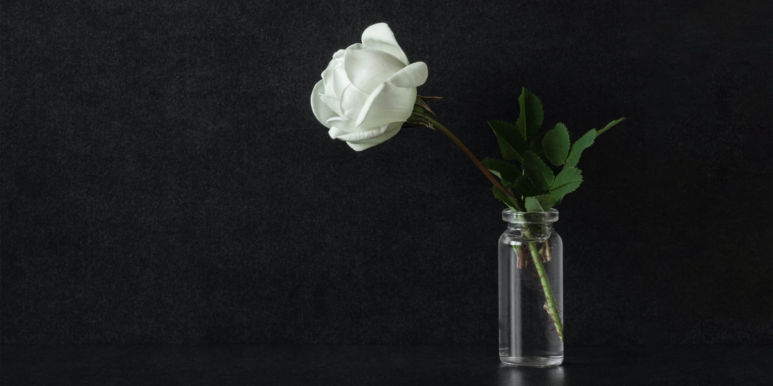 white rose, mourning